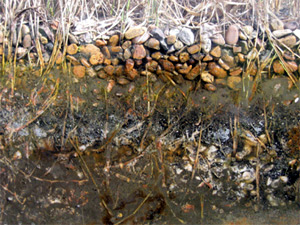 Close up of the Reed Bed Drainage System