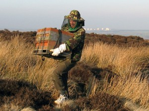 Moving the bees from the moor
